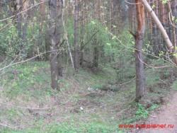 Возможно остатки противотанкового рва на правом фланге укреплений в Первомайской роще. Фото 2011г.